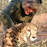 De Wildt Cheetah and Wildlife Centre switches to Identipet microchips