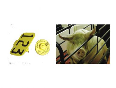 eTag for Sows